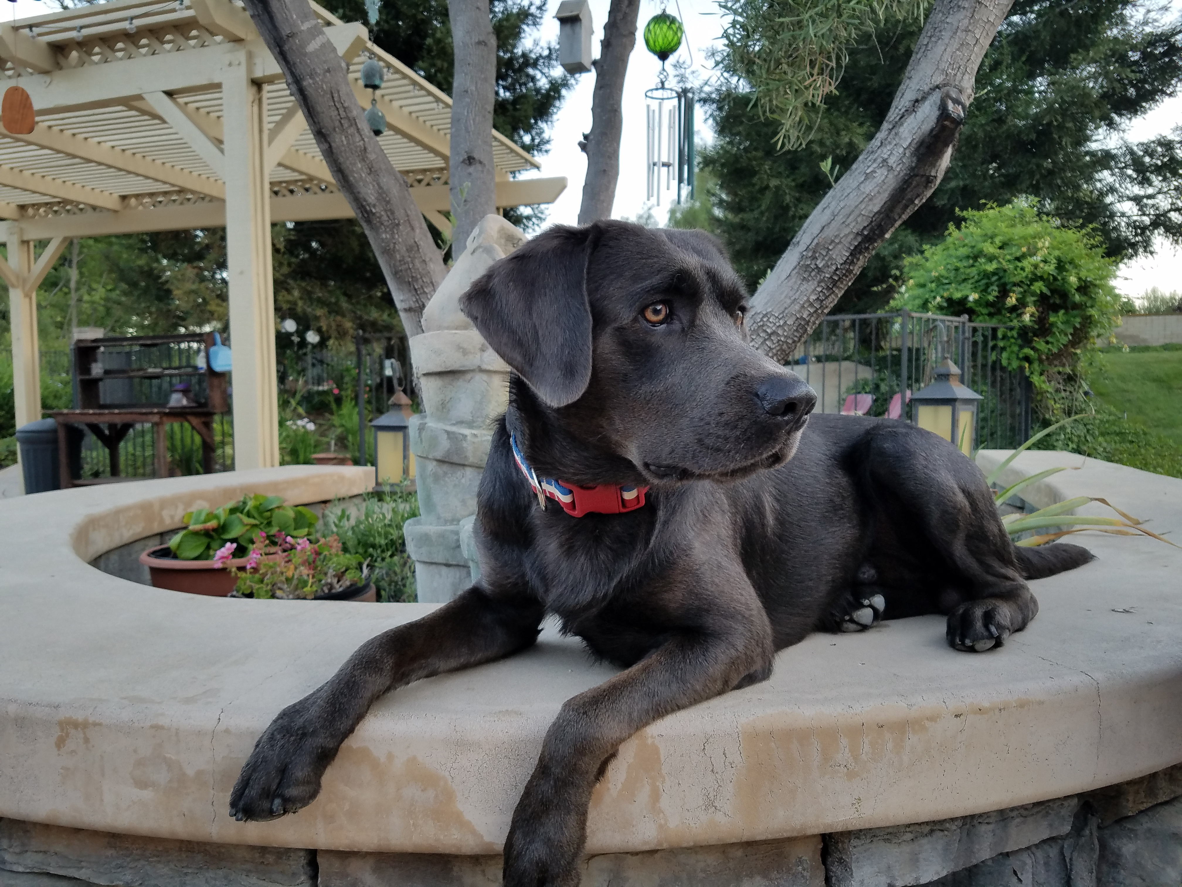 A black dog sitting on a planter.