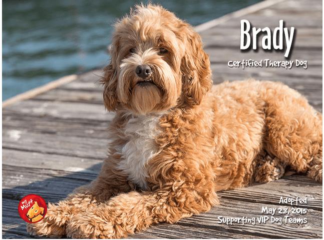 Brady Pet Food Express