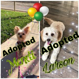 Larson and Mendi have found there forever homes